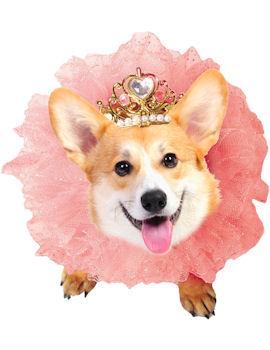 Royal Wedding Pet Fancy Dress Costume